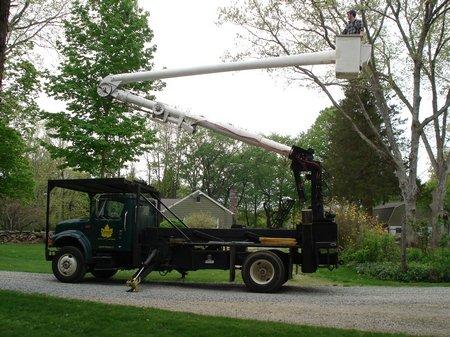 Lomas Tree Service truck